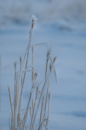 Winter Grass 2